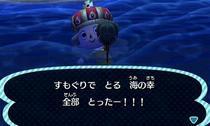 sumoguri_all.jpeg