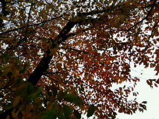 image/yuzuriha-2005-11-26T18:49:55-1.jpg