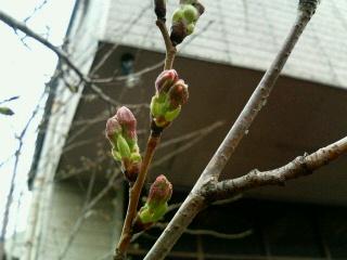 image/yuzuriha-2006-03-22T22:41:40-1.jpg