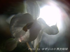 PICT0016.jpg
