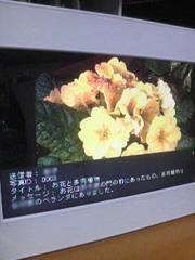 2010033018380000.jpg