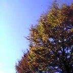 image/yuzuriha-2005-11-18T10:40:48-1.jpg