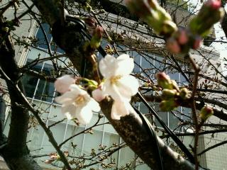 image/yuzuriha-2006-03-21T11:29:10-1.jpg