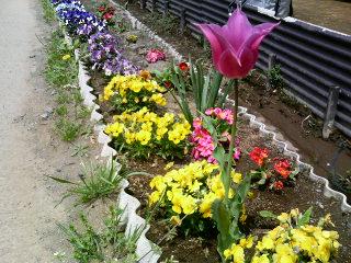 image/yuzuriha-2006-04-22T11:28:43-1.jpg